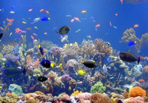 Led per acquari for Acquario marino in vendita